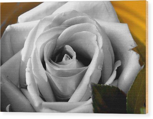 White Rose 2 Wood Print