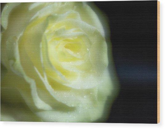 White Rose 4 Soft Wood Print