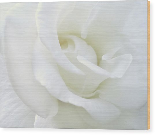 White Rose Angel Wings Wood Print