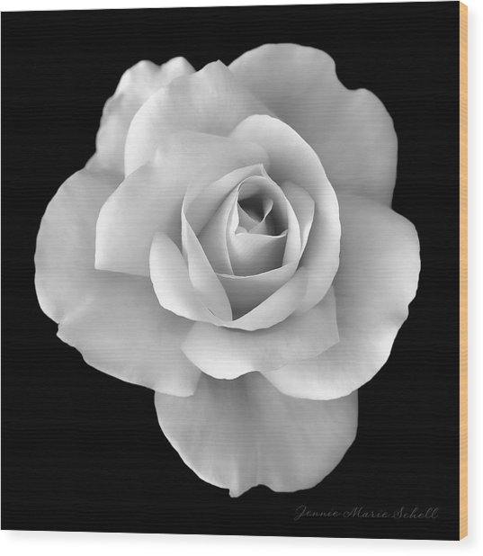 White Rose Flower In Black And White Wood Print
