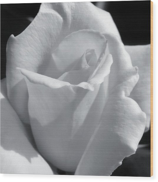 White Rose Wood Print by JAMART Photography