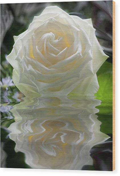 White Rose Reflection Wood Print