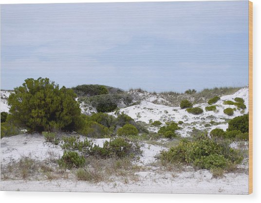 White Sand Dunes Wood Print by Tina B Hamilton