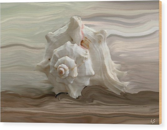 White Shell Wood Print