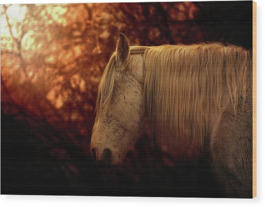 White Stallion Wood Print
