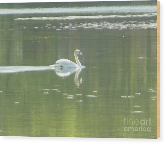 White Swan Silhouette Wood Print