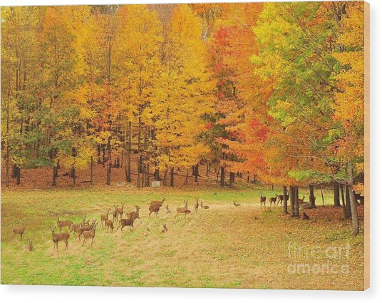 White Tail Deer Herd Wood Print