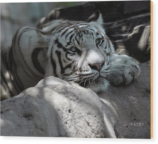 White Tiger Contiplation Wood Print