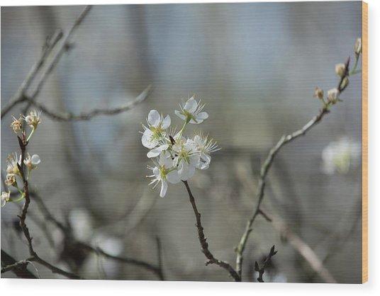 White Tree Bud Wood Print