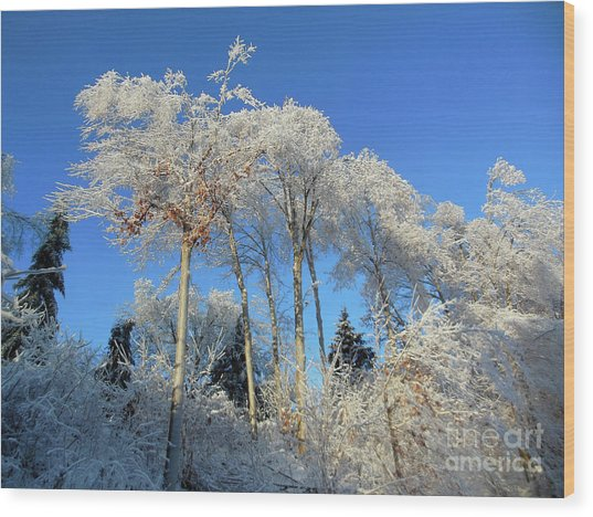 White Trees Clear Skies Wood Print