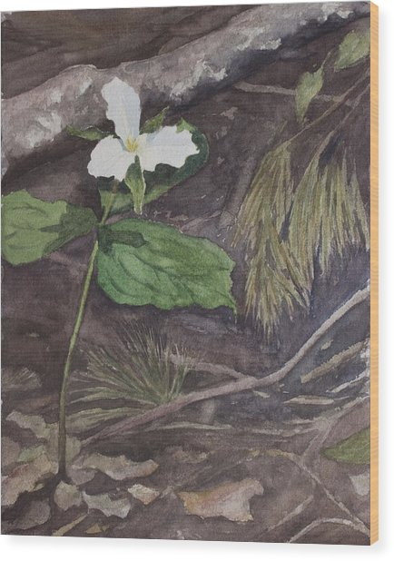 White Trillium  Wood Print by Debbie Homewood