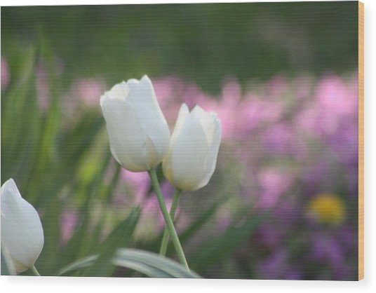 White Tulips Wood Print by Angie  Wise