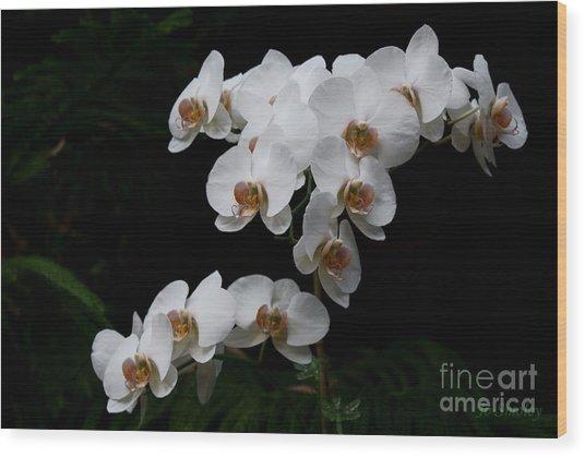 White Velvet Wood Print