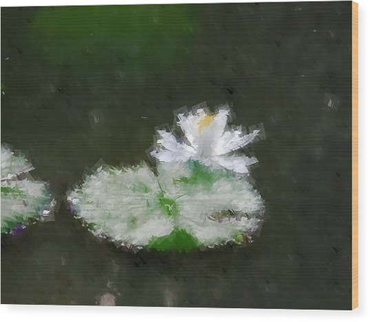 White Water Lily And Leaf Wood Print
