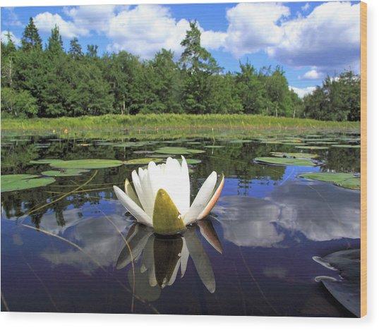 White Waterlily On A Lake Wood Print