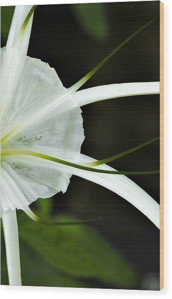 White Whispy Flower Wood Print by Tessa Hunt-Woodland