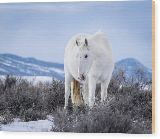 White Wild Horse Mystic Of Sand Wash Basin Wood Print