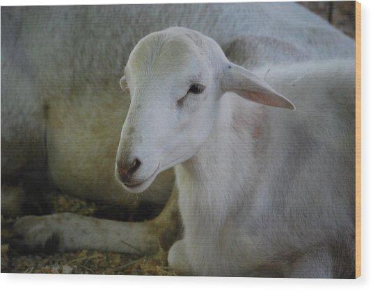 White Wool Wood Print by Lakida Mcnair