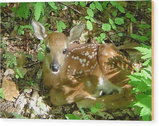Whitetail Fawn II Wood Print