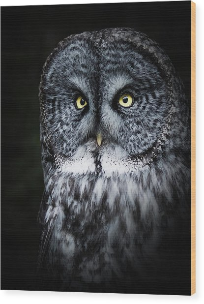 Whooo Are You Looking At? Wood Print
