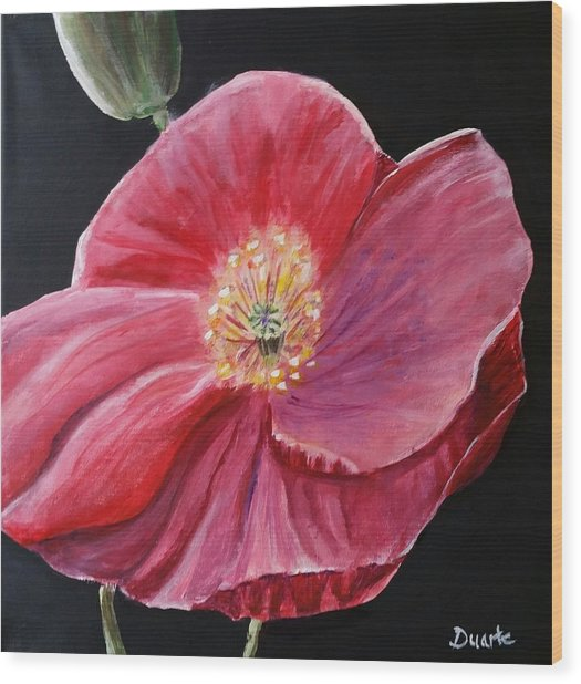 Shirley Poppy Wood Print