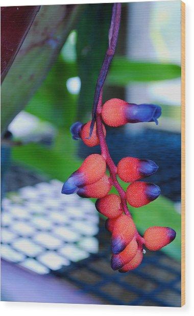 Wild About Bromeliads2 Wood Print