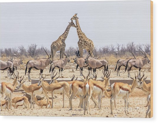Wild Animals Pyramid Wood Print