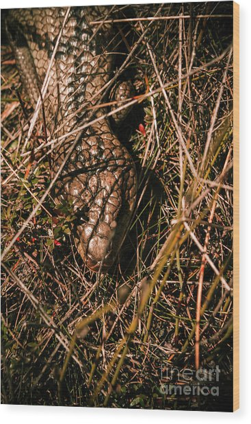 Wild Australian Blue Tongue Lizard Wood Print
