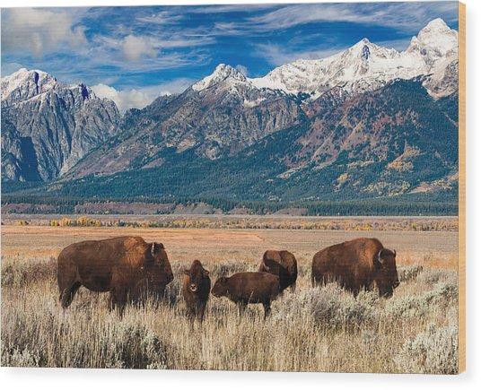 Wild Bison On The Open Range Wood Print