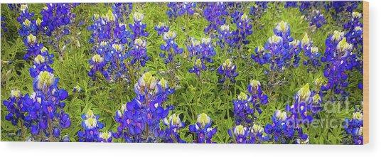 Wild Bluebonnet Flowers Wood Print