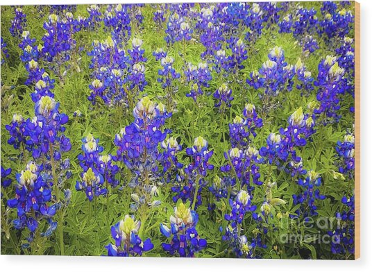 Wild Bluebonnets Blooming Wood Print