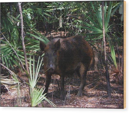 Wild Boar I Wood Print