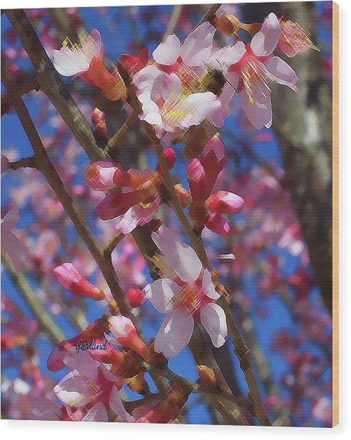 Wild Cherry Tree In Bloom Wood Print by Garland Johnson