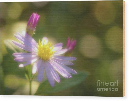 Wild Chrysanthemum Wood Print
