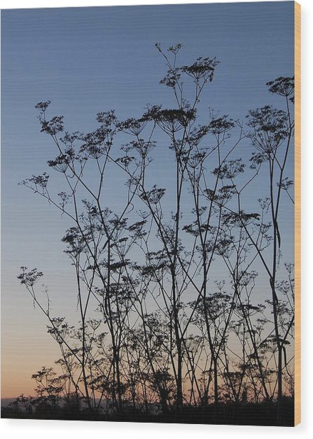Wild Dill Silhouette Wood Print by Jean Booth