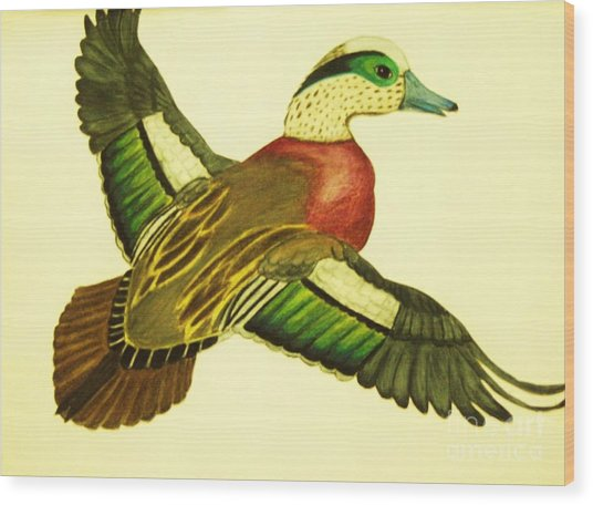 Wild Duck Wood Print by Jamey Balester