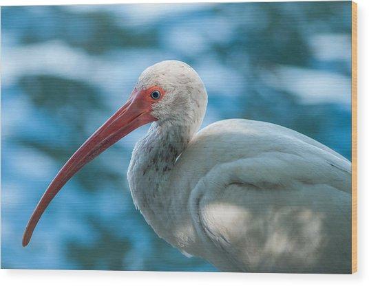 Wild Eyed Ibis Wood Print