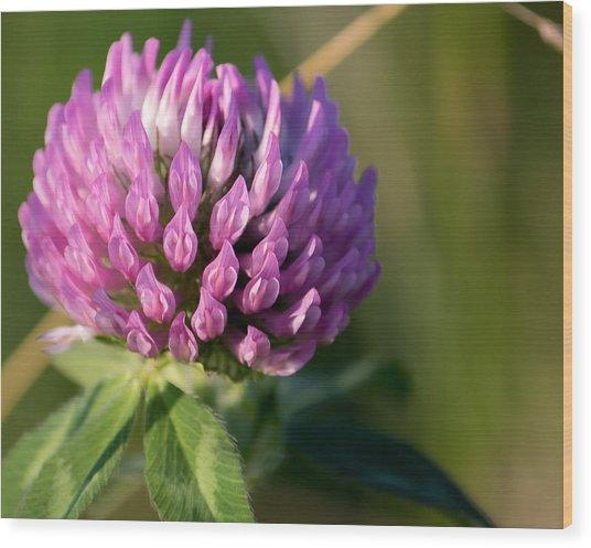 Wild Flower Bloom  Wood Print