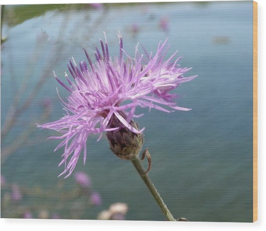 Wild Flower By The Lake Wood Print