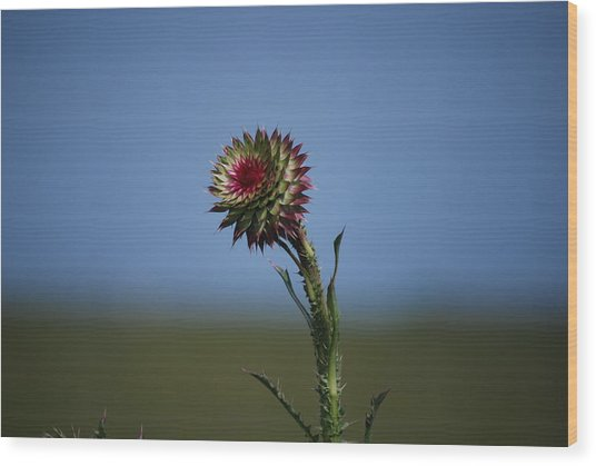 Wild Flower Wood Print by John Roncinske