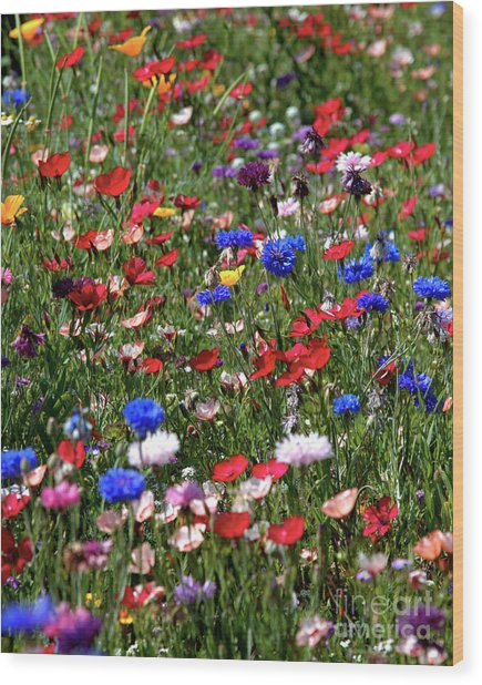 Wild Flower Meadow 2 Wood Print