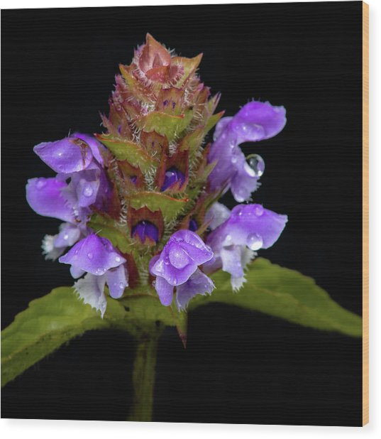 Wild Flower Portrait Wood Print