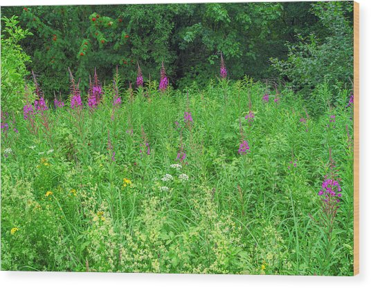 Wild Flowers And Shrubs In Vogelsberg Wood Print