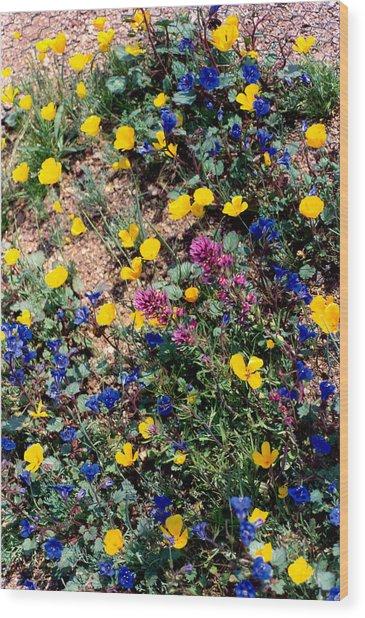Wild Flowers Wood Print by Eliot LeBow