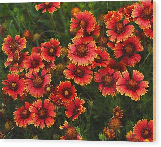 Wild Flowers In Field Color Art Print Wood Print by Randy Steele