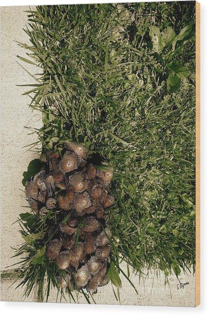 Wild Fungus Botany Hive  Wood Print by Steven Digman