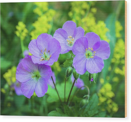 Wild Geranium Family Portrait Wood Print