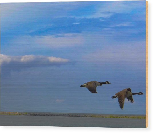 Wild Goose Chase Wood Print