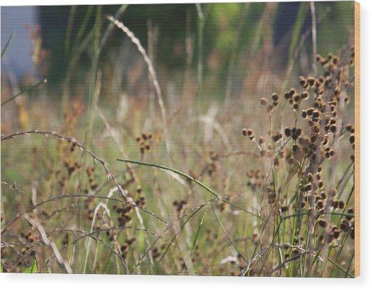 Wild Grass And Burrs Wood Print by Jonathan Kotinek
