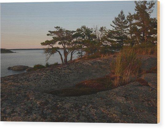 Wild Grass At Sunset - Georgian Bay Wood Print